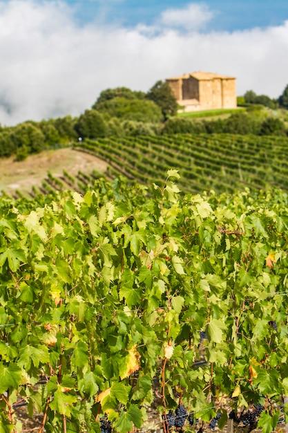 Vignoble près de montalcino, italie Photo Premium