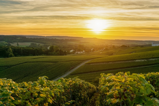 Vignobles De Champagne Au Coucher Du Soleil Montagne De Reims, France Photo Premium