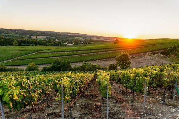 Vignobles De Champagne à La Montagne De Reims Photo Premium