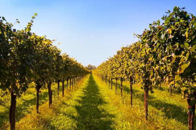 Vignobles Photo Premium