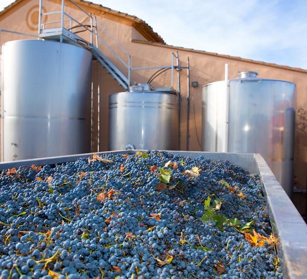 Vinification de cabernet sauvignon avec des raisins et des réservoirs Photo Premium