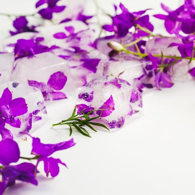 Violettes En Cubes De Glace Photo gratuit