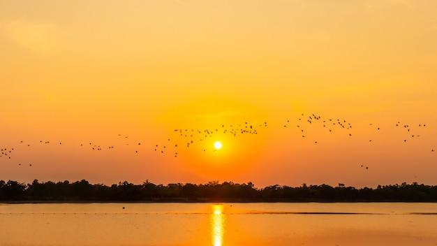 Volée d'oiseaux dans le réservoir, ombre du coucher du soleil, mouette Photo Premium
