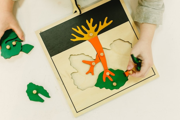 Vu d'en haut, un puzzle montessori pour apprendre les parties d'un arbre, Photo Premium