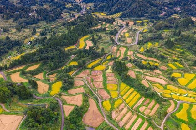 Vue aérienne, de, doré, terrasse, rizière, dans, hoshitoge, niigata, japon Photo Premium