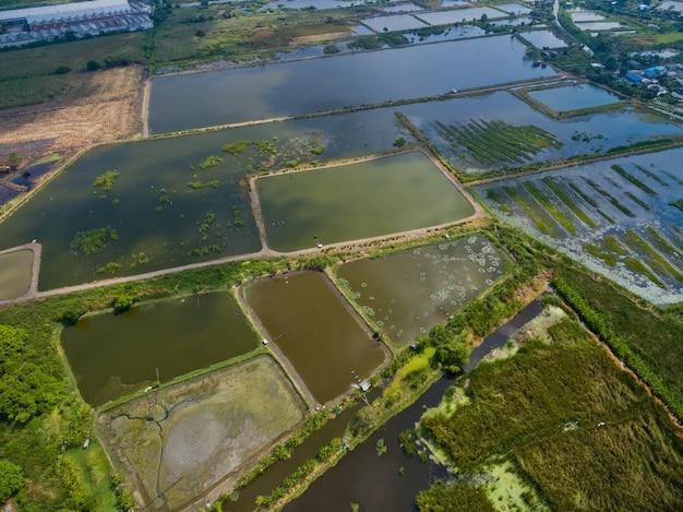 Vue aérienne du drone volant de riz sur le terrain avec fond de nature paysage vert Photo Premium