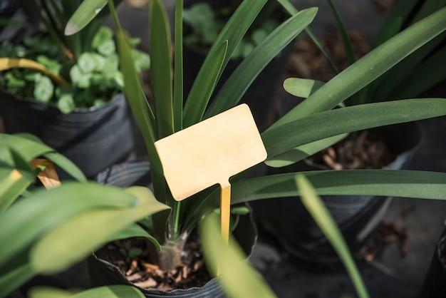 Vue aérienne d'une étiquette vierge dans la plante en pot Photo gratuit