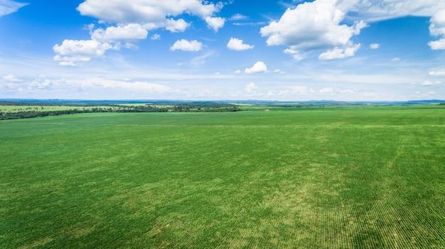 Vue aérienne d'une ferme avec des plantations de soja ou de haricots. Photo Premium