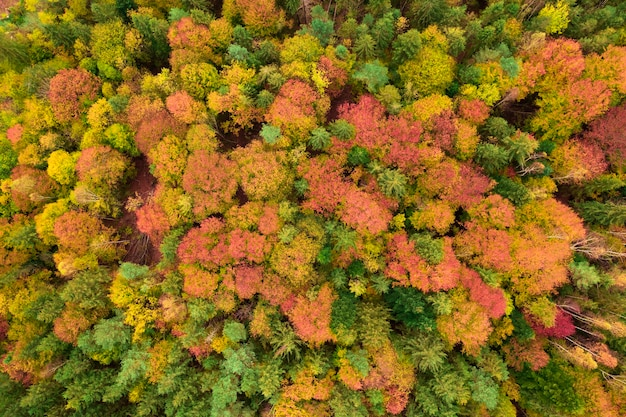 Vue Aérienne De La Forêt D'automne, Arbres Jaunes Et Verts. Fond Ou Texture. Photo Premium