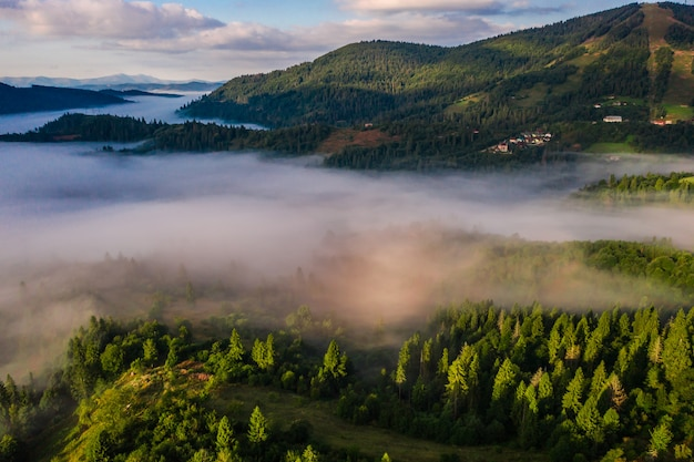Vue Aérienne, De, Forêt, Enveloppé, Dans, Matin, Brouillard Photo gratuit