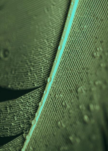 Une vue aérienne de gouttelettes d'eau sur la plume Photo gratuit