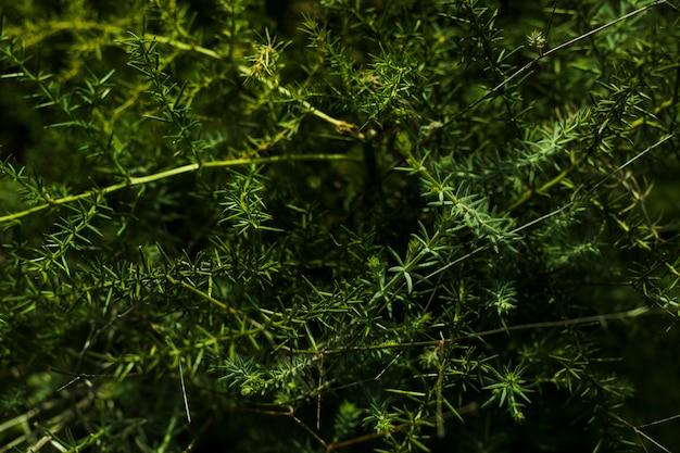 Vue aérienne, de, plante verte Photo gratuit