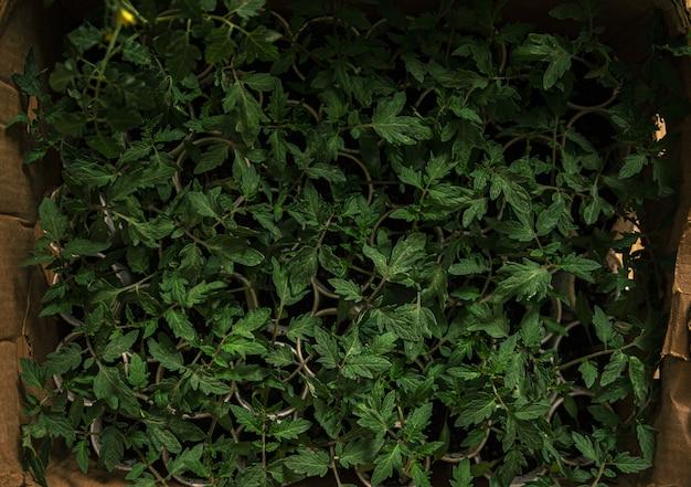 Vue Aérienne De Plantes De Sauge Commune Sur De Petits Pots Regroupés Dans Une Boîte Photo gratuit
