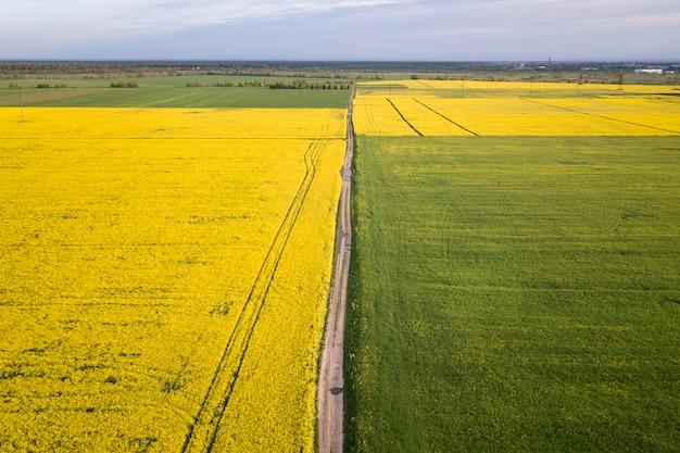 Vue aérienne de la route au sol droite dans les champs verts et jaunes avec floraison des plantes de colza sur printemps ensoleillé ou le jour de l'été. Photo Premium