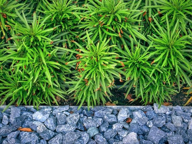 Vue d'angle élevé de petits buissons verts par le sol en pierre Photo Premium