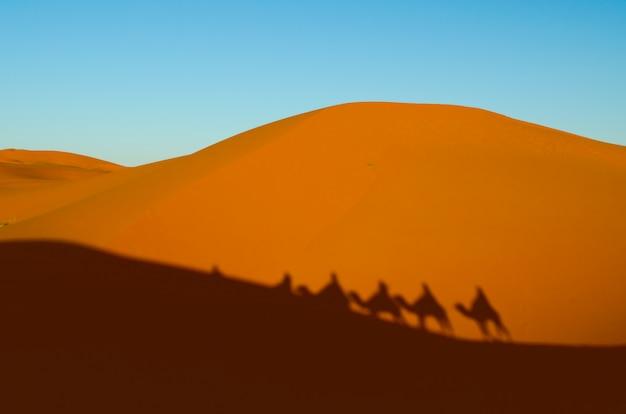 Vue de caravane voyageant et chameaux ombres sur la dune de sable dans le désert du sahara Photo Premium