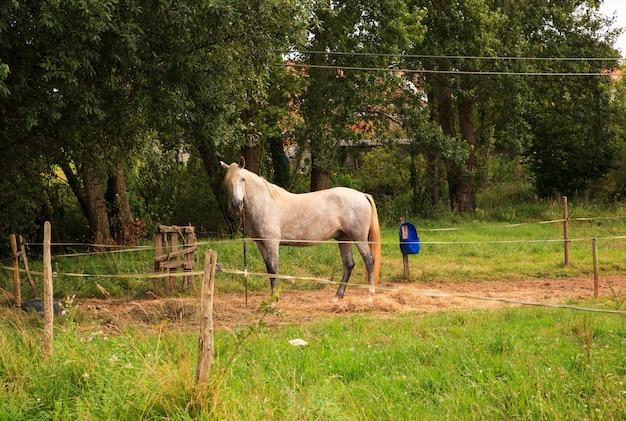 Vue de cheval Photo Premium