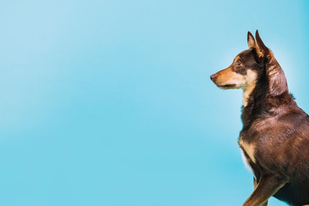Vue de côté du chien Photo gratuit