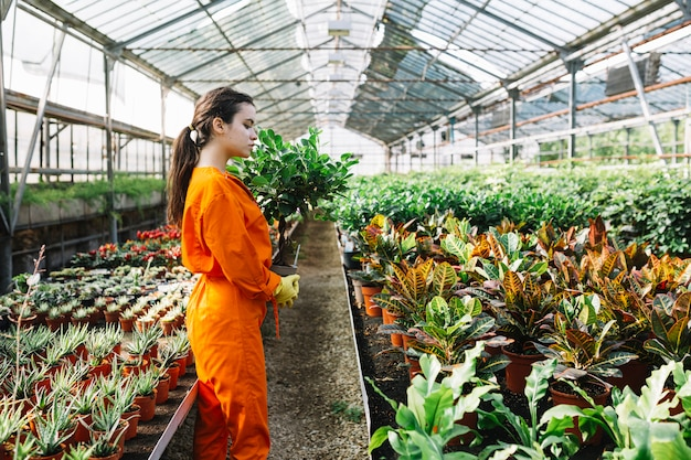 Vue de côté d'une jardinière femelle avec plante en pot en serre Photo gratuit
