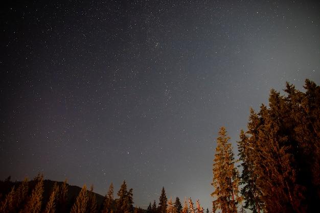 Vue de dessous de beaux arbres et du ciel Photo gratuit