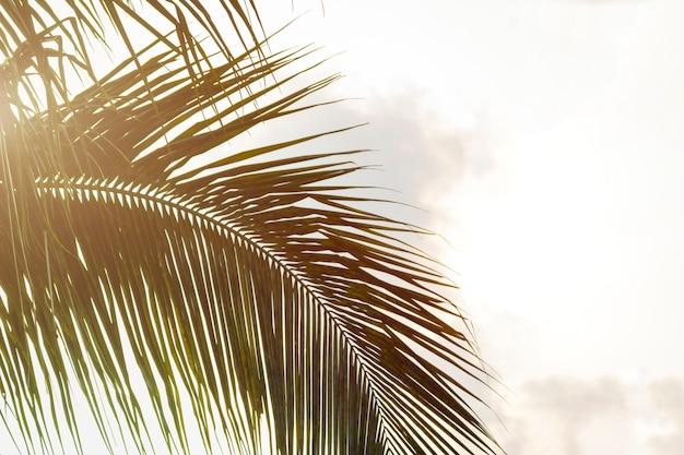 Vue de dessous des feuilles de cocotier Photo Premium