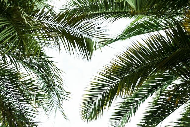 Vue de dessous de feuilles exotiques vertes Photo gratuit