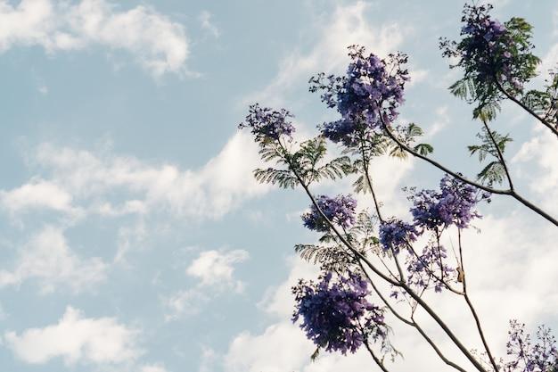 Vue de dessous de la plante avec des fleurs pourpres Photo gratuit
