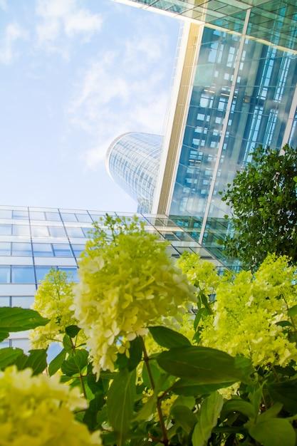 Vue de dessous à travers des fleurs de géraniums des gratte-ciel de verre du quartier des affaires de paris la défense sur un ciel bleu nuageux Photo Premium