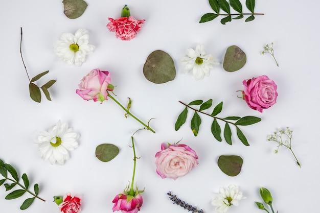 Vue de dessus de belles fleurs sur fond blanc Photo gratuit