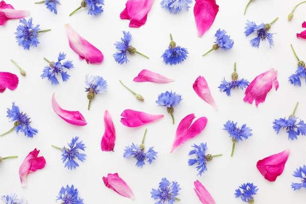 Vue De Dessus Bleuets Et Pétales Roses Photo gratuit