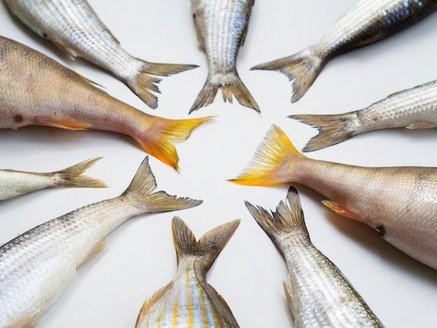 Vue de dessus cadre de queues de poisson frais Photo gratuit