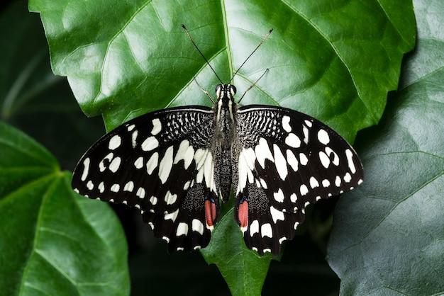 Vue de dessus détaillée papillon assis sur une feuille Photo gratuit