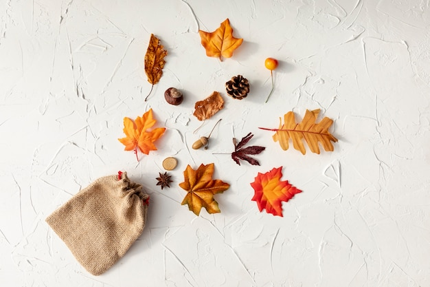 Vue de dessus différentes feuilles sur fond blanc Photo gratuit