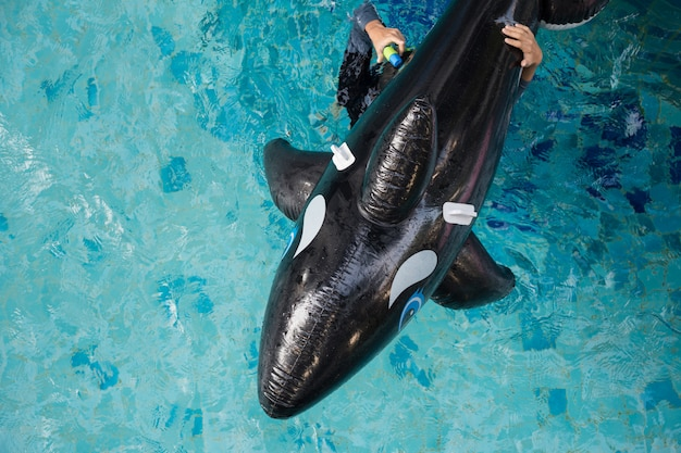 Vue de dessus du dauphin gonflable sur la piscine Photo Premium