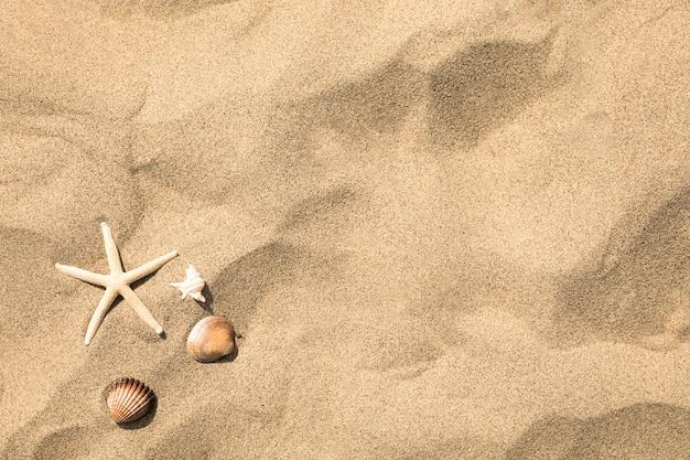 Vue de dessus des étoiles de mer et des coquillages sur la plage de sable tropicale Photo gratuit