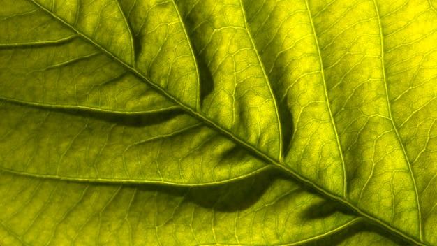 Vue De Dessus De La Feuille Tropicale Photo gratuit