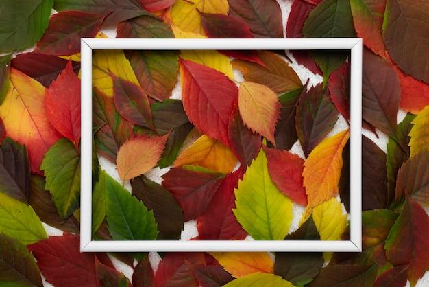 Vue De Dessus Des Feuilles D'automne Colorées Avec Cadre Photo gratuit