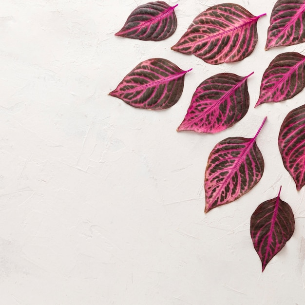 Vue De Dessus Des Feuilles D'automne Magnifiquement Colorées Photo gratuit