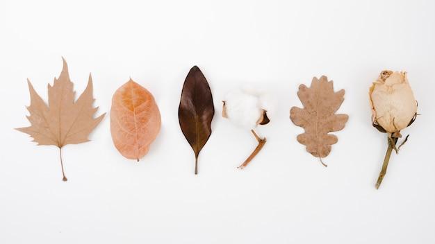 Vue de dessus feuilles d'automne à plat Photo gratuit