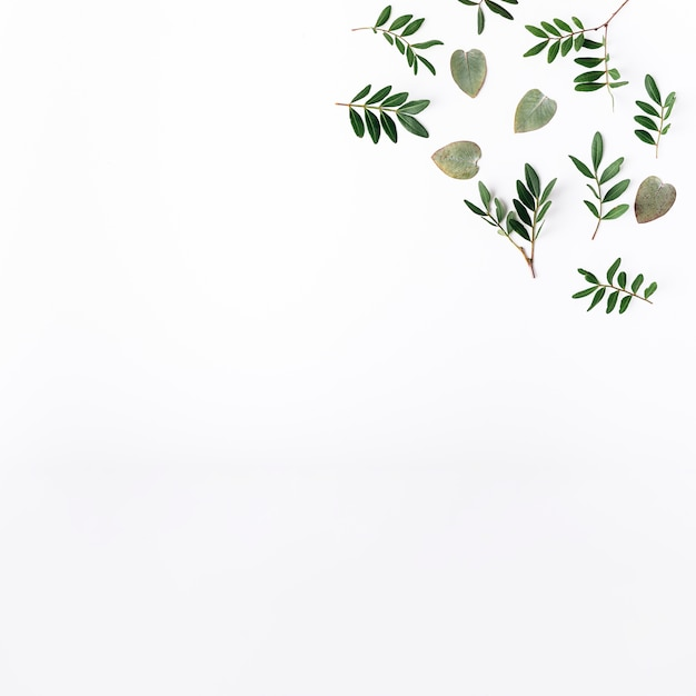 Vue de dessus des feuilles vertes Photo gratuit