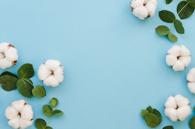 Vue De Dessus Des Fleurs De Coton Sur Fond Bleu Photo gratuit