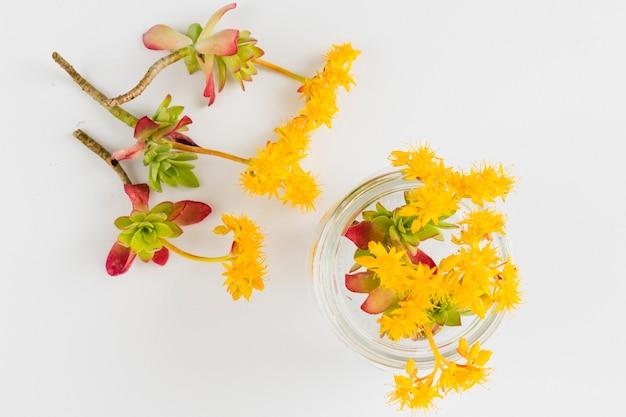 Vue de dessus fleurs et pétales jaunes Photo gratuit