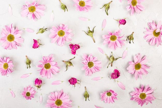 Vue De Dessus Des Fleurs Et Des Pétales De Marguerite Rose Photo gratuit