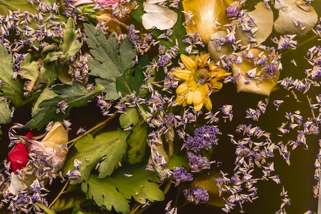 Vue De Dessus Des Fleurs Violettes Et Jaunes Dans L'eau Noire Photo gratuit