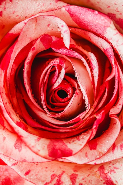 Vue De Dessus Fond Gros Plan Rose Photo gratuit