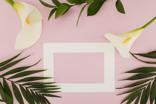 Vue de dessus iris et feuilles tropicales Photo gratuit