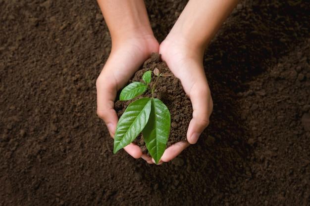 Vue de dessus, main, tenue, jeune arbre, planter, dans, jardin Photo Premium