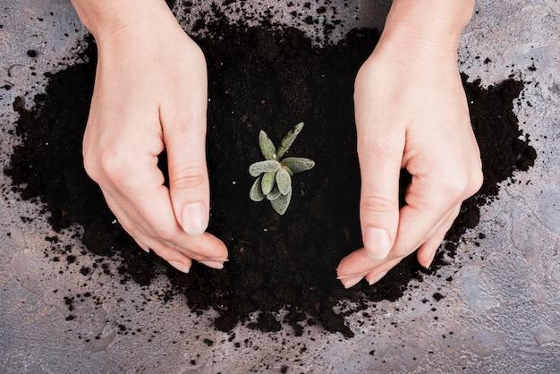 Vue de dessus des mains et des plantes dans le sol Photo gratuit