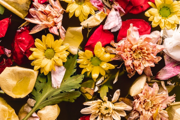 Vue de dessus multi couleur fleurs dans eau Photo gratuit