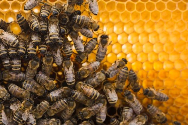 Vue de dessus en nid d'abeille avec abeilles Photo gratuit
